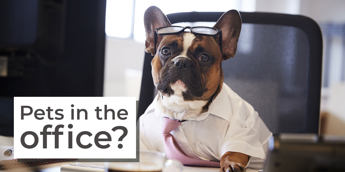 Do dogs boost office morale? - Featured Image